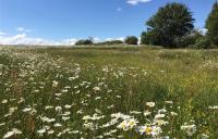 Established ecological mitigation site at Finham Brook, Warwickshire. Photo credit: HS2 Ltd.